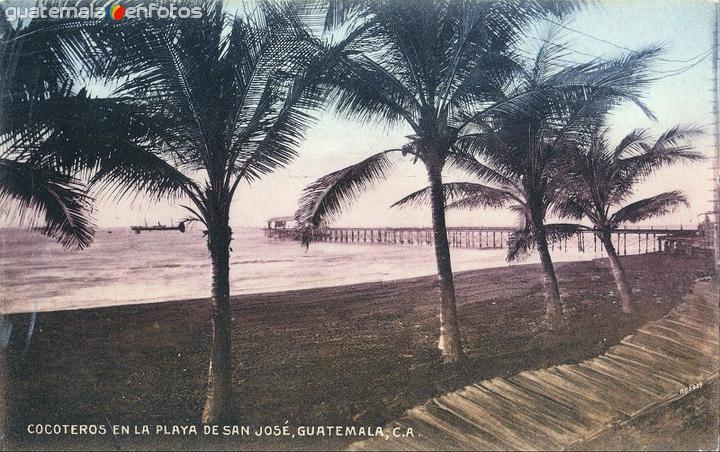 Cocoteros en la playa de San José
